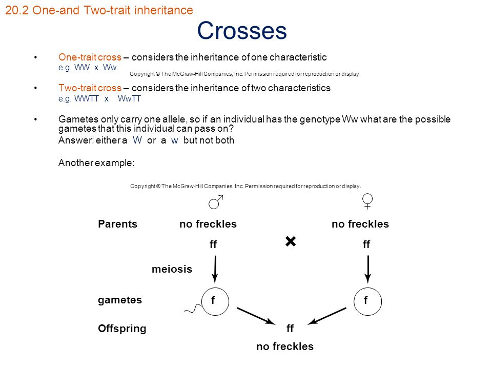 Crosses One-trait cross – considers the inheritance of one characteristic e.g. WW x Ww Two-trait cross – considers the inheritance of two characterist