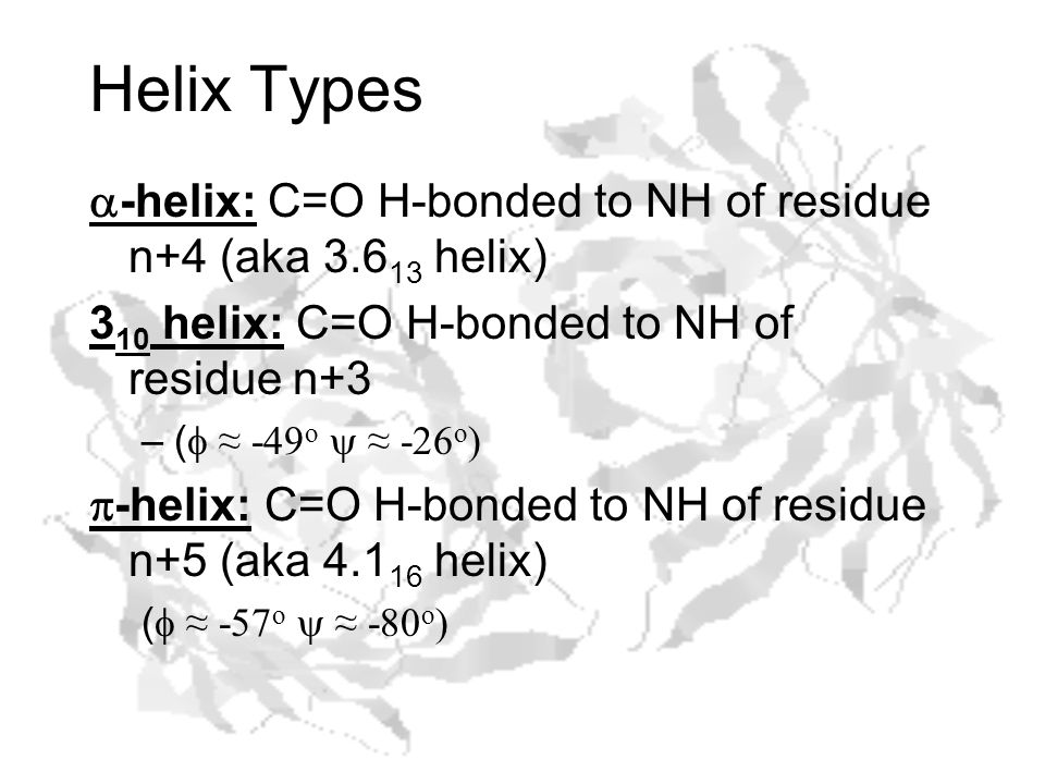 Helix Types  -helix: C=O H-bonded to NH of residue n+4 (aka 3.6 13 helix) 3 10 helix: C=O H-bonded to NH of residue n+3 –(  ≈ -49 o  ≈ -26 o )  -helix: C=O H-bonded to NH of residue n+5 (aka 4.1 16 helix) (  ≈ -57 o  ≈ -80 o )
