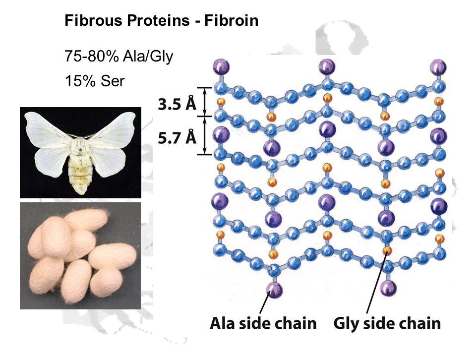 Fibrous Proteins - Fibroin 75-80% Ala/Gly 15% Ser