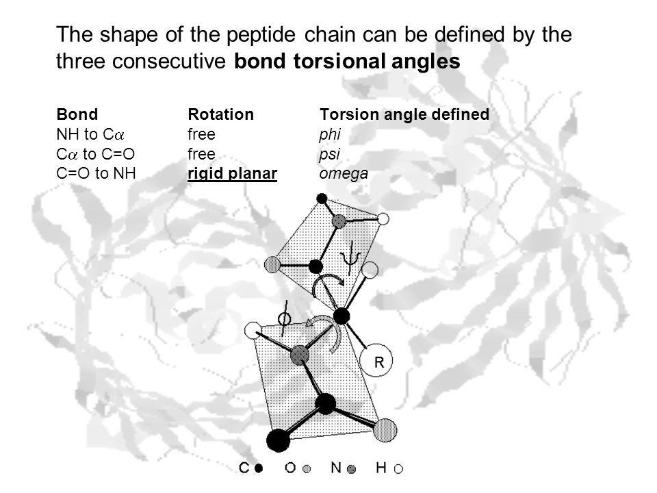 The shape of the peptide chain can be defined by the three consecutive bond torsional angles BondRotationTorsion angle defined NH to C  freephi C  to C=Ofreepsi C=O to NHrigid planaromega