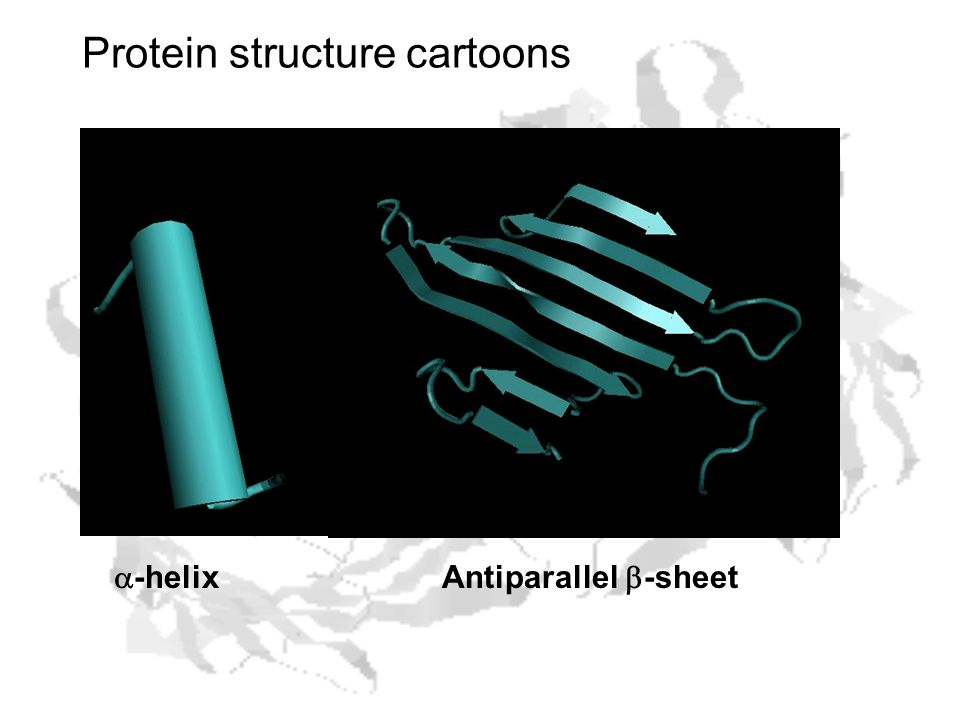 Protein structure cartoons  -helixAntiparallel  -sheet