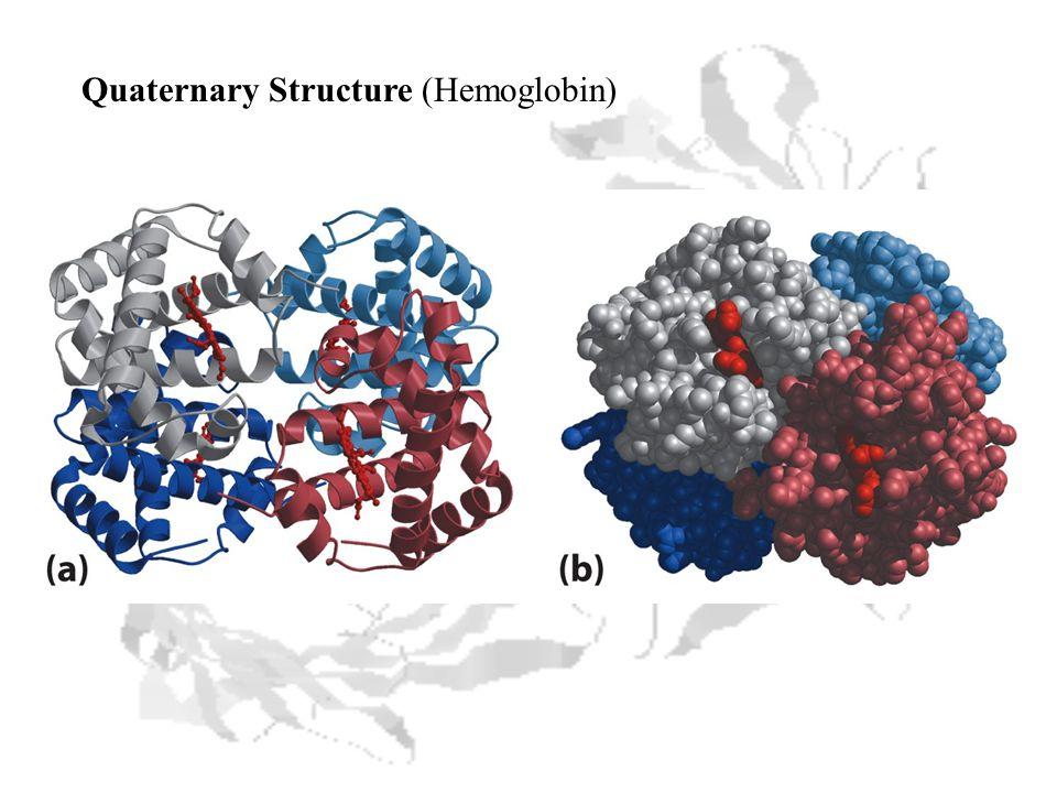 Quaternary Structure (Hemoglobin)
