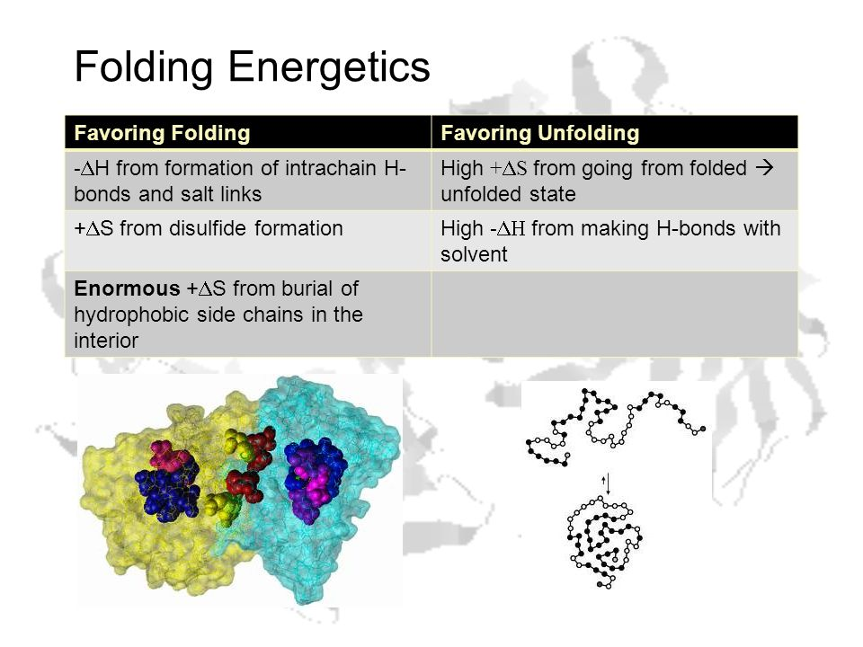 Folding Energetics Favoring FoldingFavoring Unfolding -  H from formation of intrachain H- bonds and salt links High +  S from going from folded  unfolded state +  S from disulfide formationHigh -  from making H-bonds with solvent Enormous +  S from burial of hydrophobic side chains in the interior
