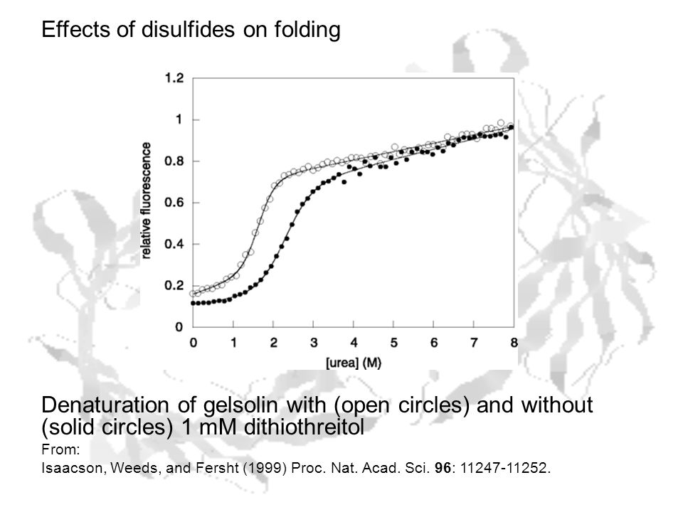 Effects of disulfides on folding Denaturation of gelsolin with (open circles) and without (solid circles) 1 mM dithiothreitol From: Isaacson, Weeds, and Fersht (1999) Proc.