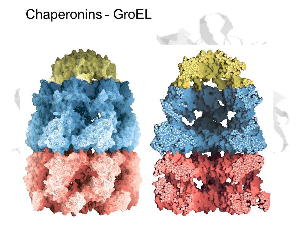 Chaperonins - GroEL