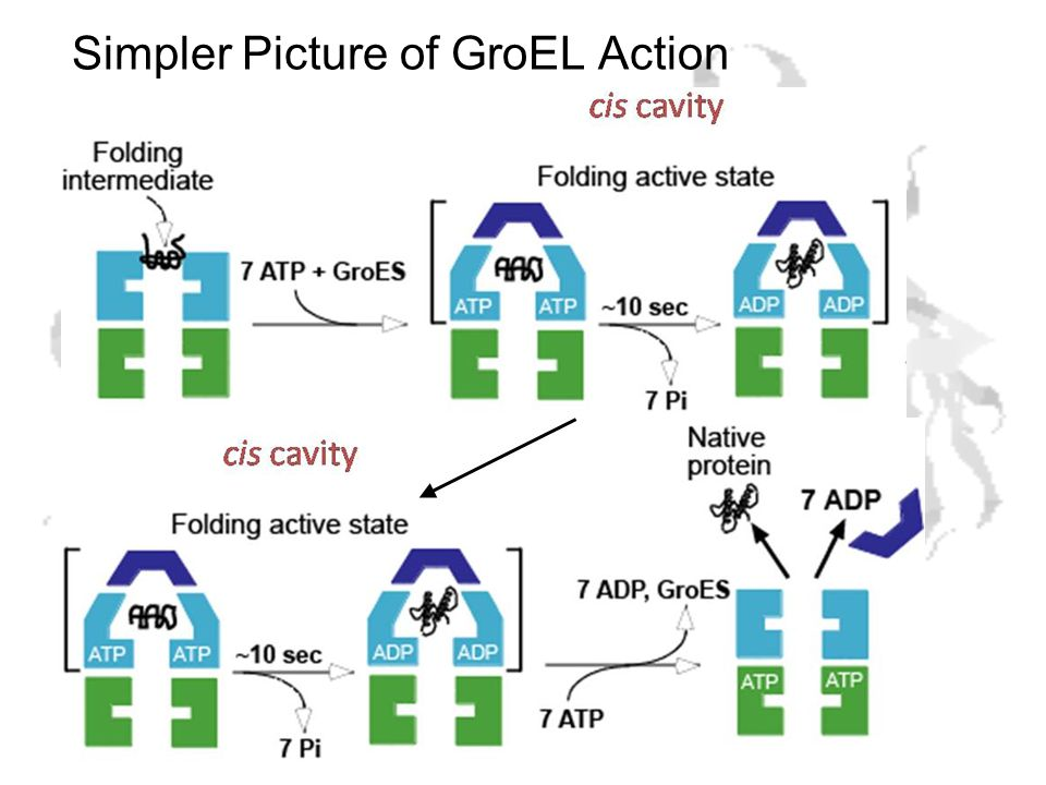 Simpler Picture of GroEL Action