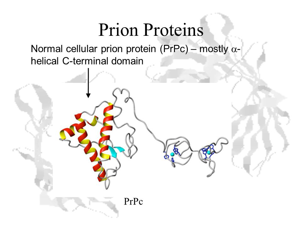 Prion Proteins PrPc Normal cellular prion protein (PrPc) – mostly  - helical C-terminal domain