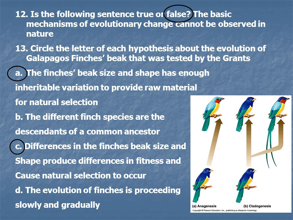 12. Is the following sentence true or false? The basic mechanisms of evolutionary change cannot be observed in nature 13. Circle the letter of each hy
