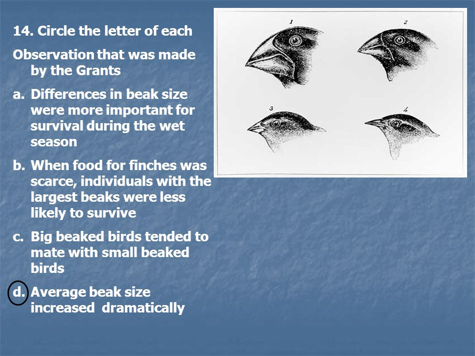 14. Circle the letter of each Observation that was made by the Grants a.Differences in beak size were more important for survival during the wet seaso
