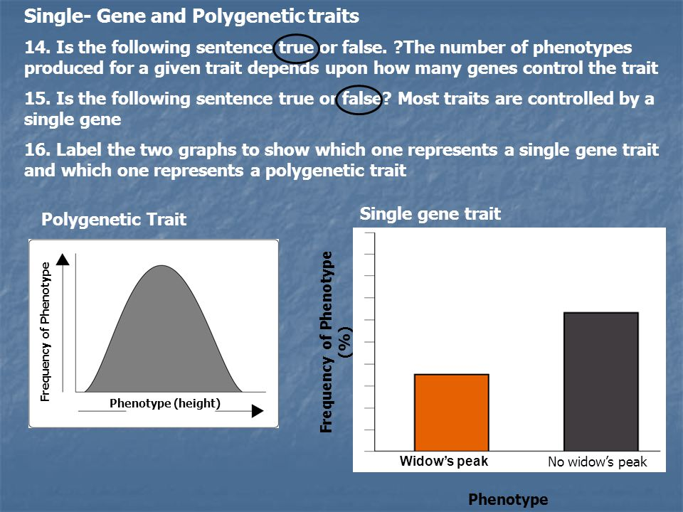 16-2 Evolution as Genetic Change Natural Selection on Single-Gene Traits 1.