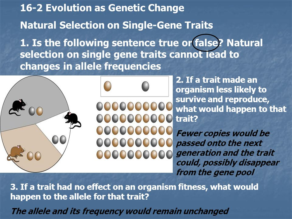 16-2 Evolution as Genetic Change Natural Selection on Single-Gene Traits 1. Is the following sentence true or false? Natural selection on single gene