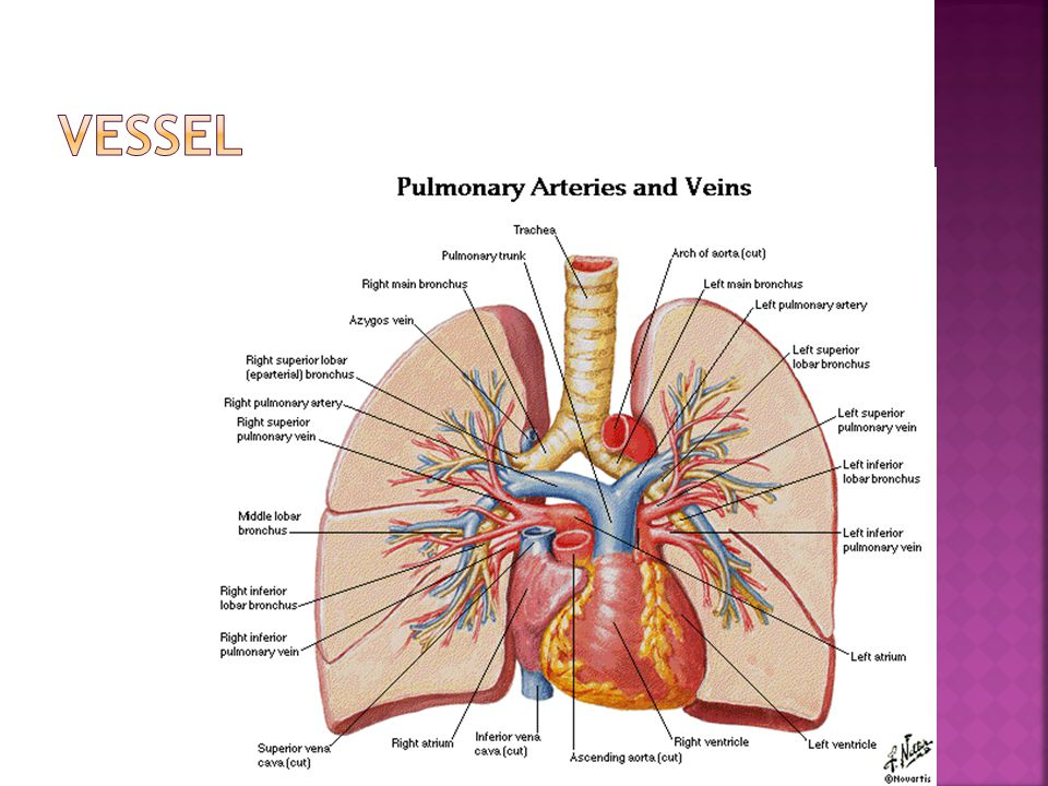  Slice spacing Adequate assessment of patient 10 mm interval  1 to 2 mm slice with 10 mm interval allows only 10 to 20% of lung  Improved spatial resolution allows better assessment of normal and abnormal findings  Pulmonary metastasis requires 5 to 7mm thick sections  Trachea and central bronchi 3 to 5mm thick sections  Pulmonary parenchyma and peripheral bronchi requires 1 to 2 mm sections