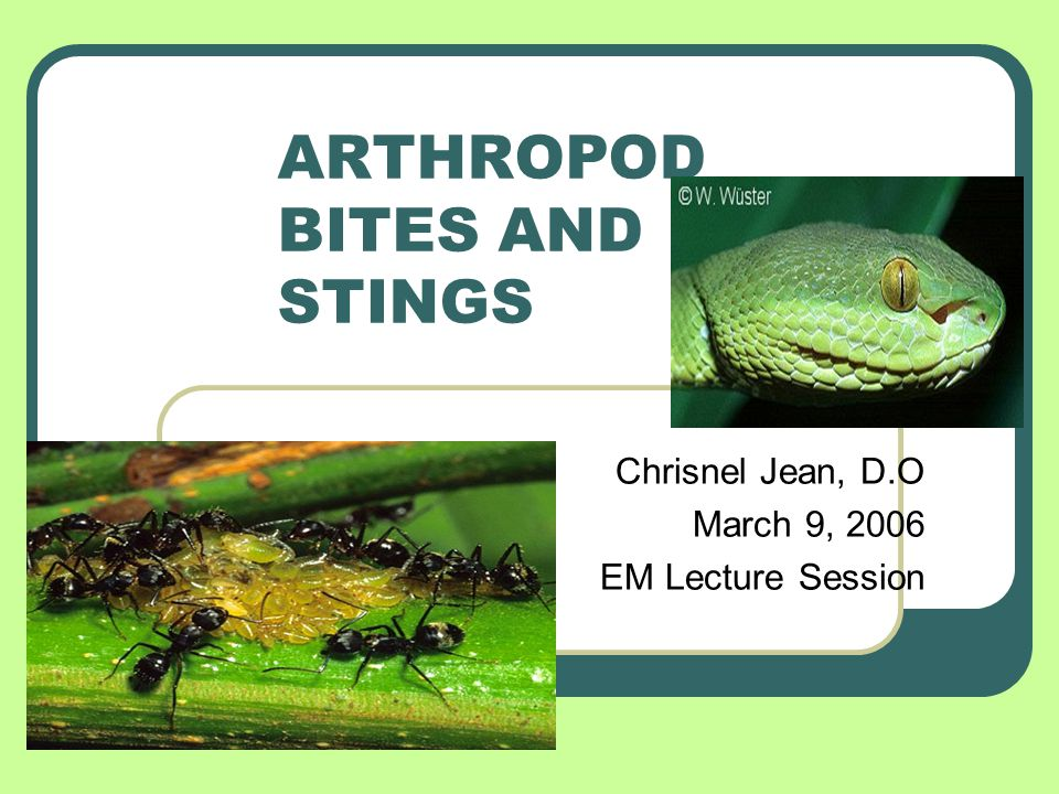 ARTHROPOD BITES AND STINGS Chrisnel Jean, D.O March 9, 2006 EM Lecture Session