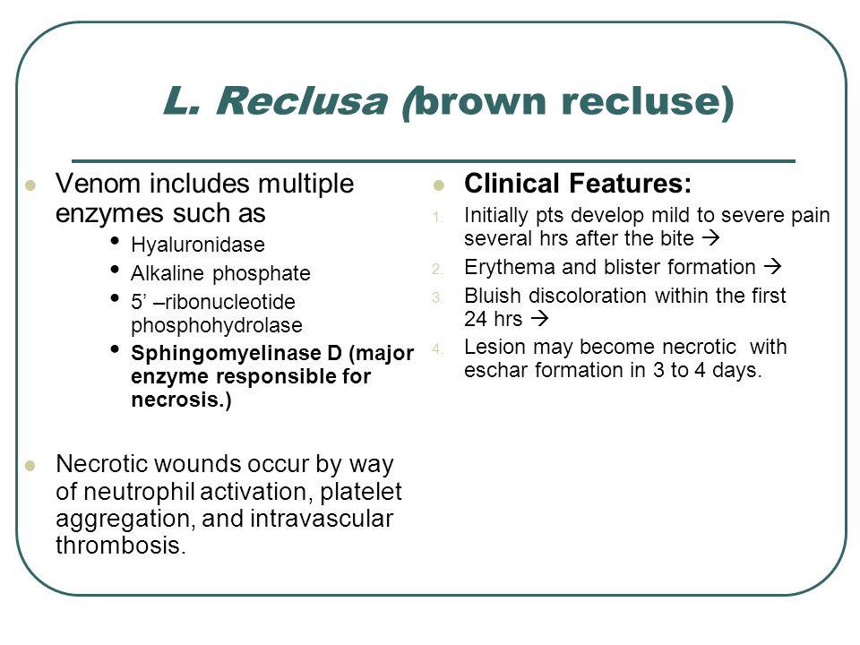 L. Reclusa (brown recluse) Venom includes multiple enzymes such as Hyaluronidase Alkaline phosphate 5' –ribonucleotide phosphohydrolase Sphingomyelina