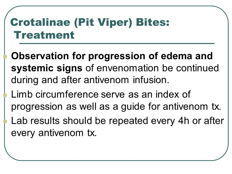 Crotalinae (Pit Viper) Bites: Treatment Observation for progression of edema and systemic signs of envenomation be continued during and after antivenom infusion.