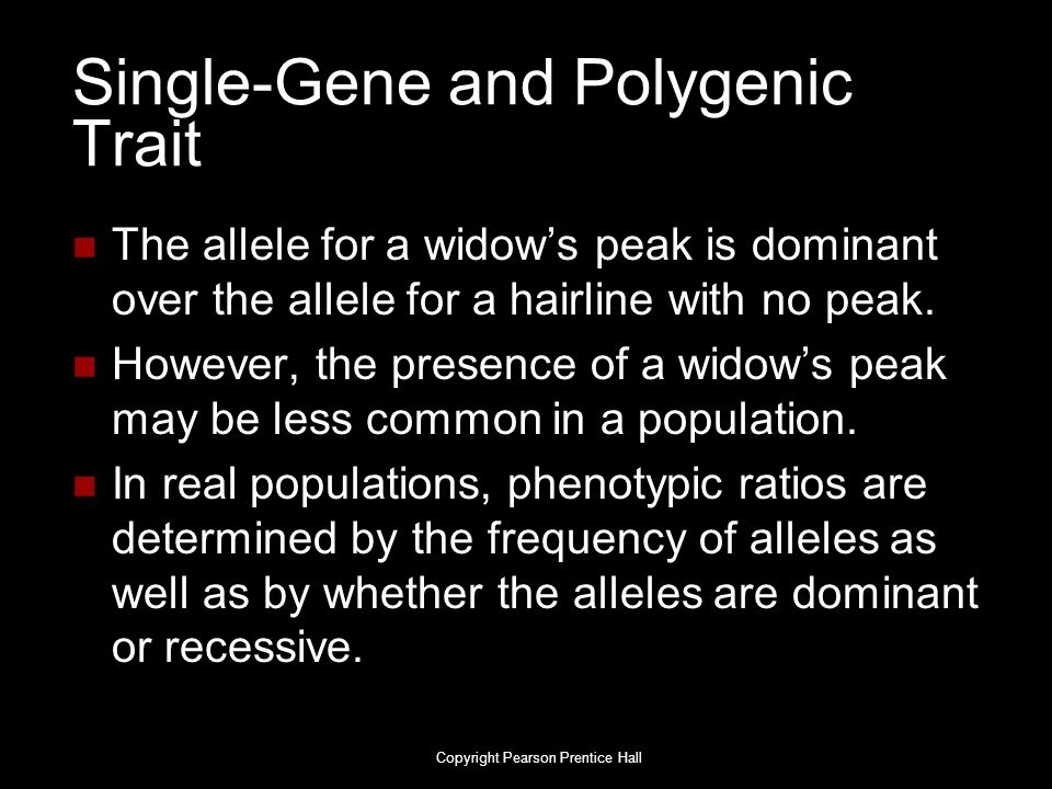 Single-Gene and Polygenic Trait The allele for a widow's peak is dominant over the allele for a hairline with no peak. However, the presence of a wido
