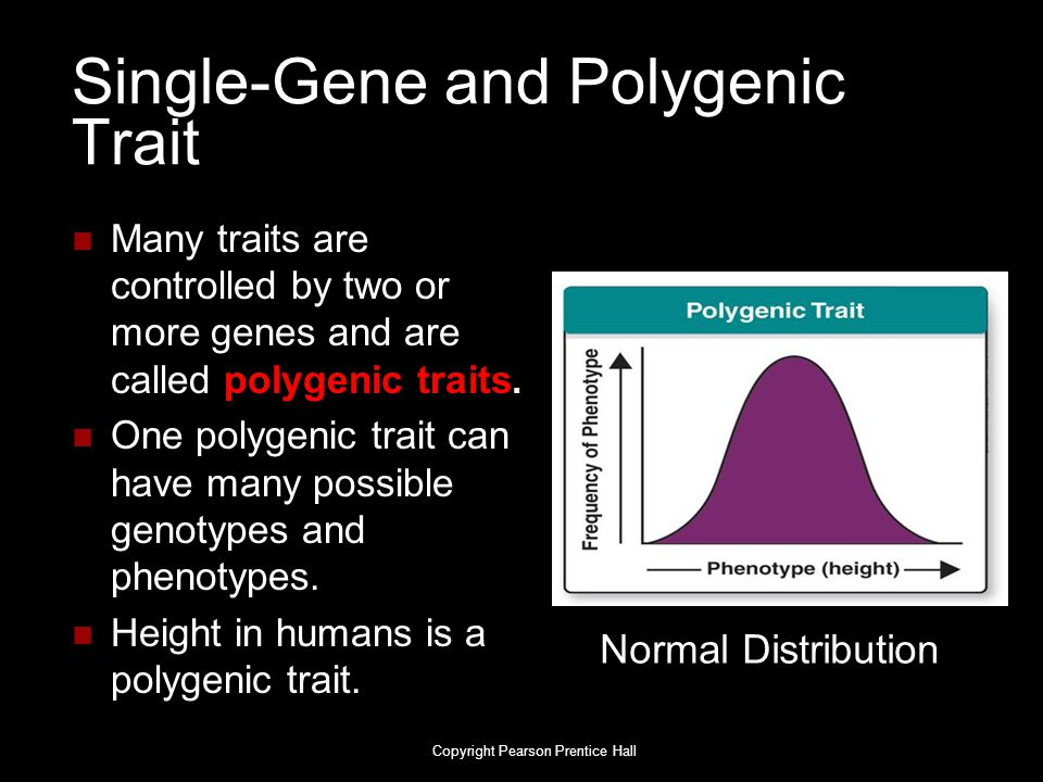 Single-Gene and Polygenic Trait Many traits are controlled by two or more genes and are called polygenic traits. One polygenic trait can have many pos