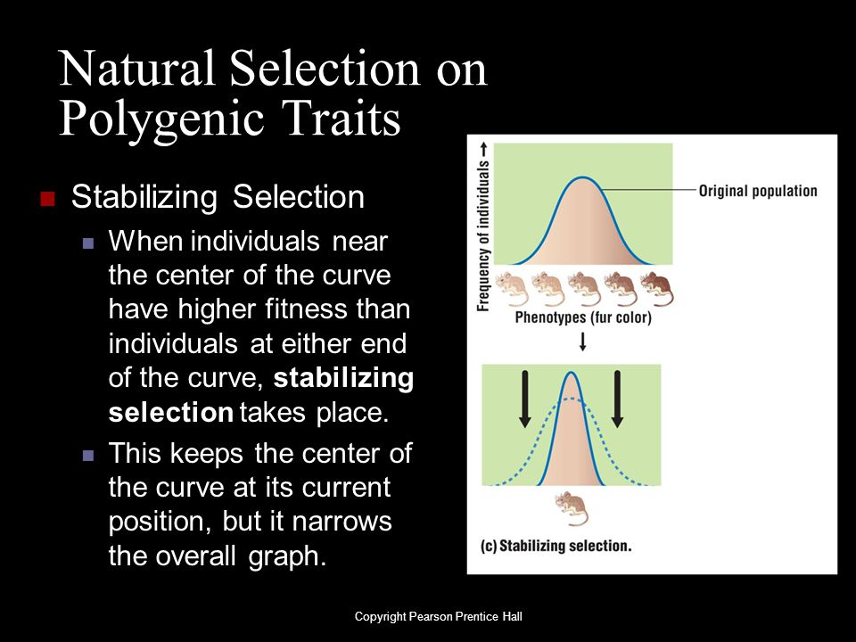 Natural Selection on Polygenic Traits Stabilizing Selection When individuals near the center of the curve have higher fitness than individuals at eith