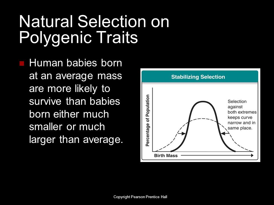 Natural Selection on Polygenic Traits Human babies born at an average mass are more likely to survive than babies born either much smaller or much lar