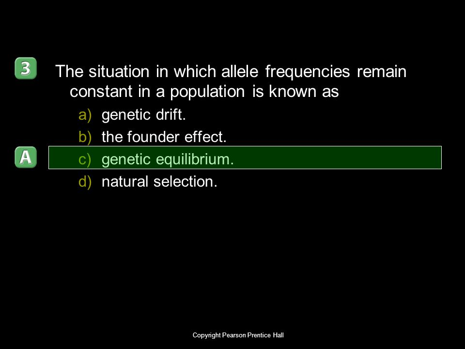 Copyright Pearson Prentice Hall The situation in which allele frequencies remain constant in a population is known as a)genetic drift. b)the founder e