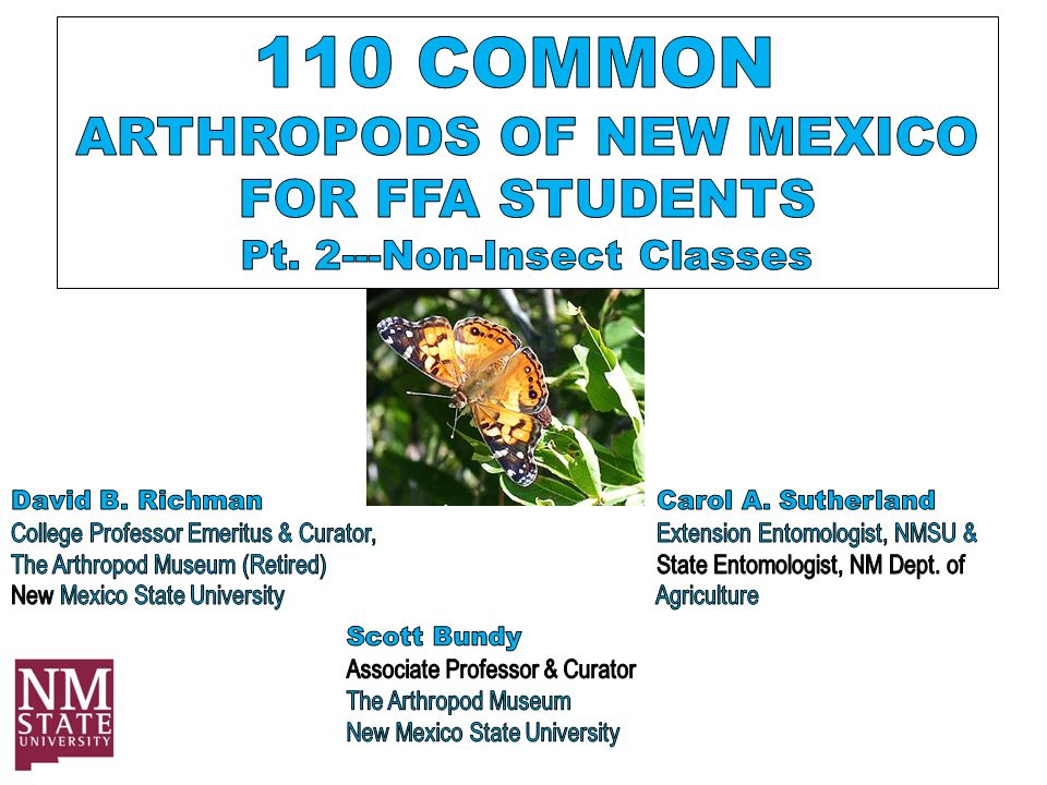 Arthropoda: Class Arachnida Order Araneae – Jumping Spider Metamorphosis: None Mouthparts: Chewing & Sucking All Photos: D.B.