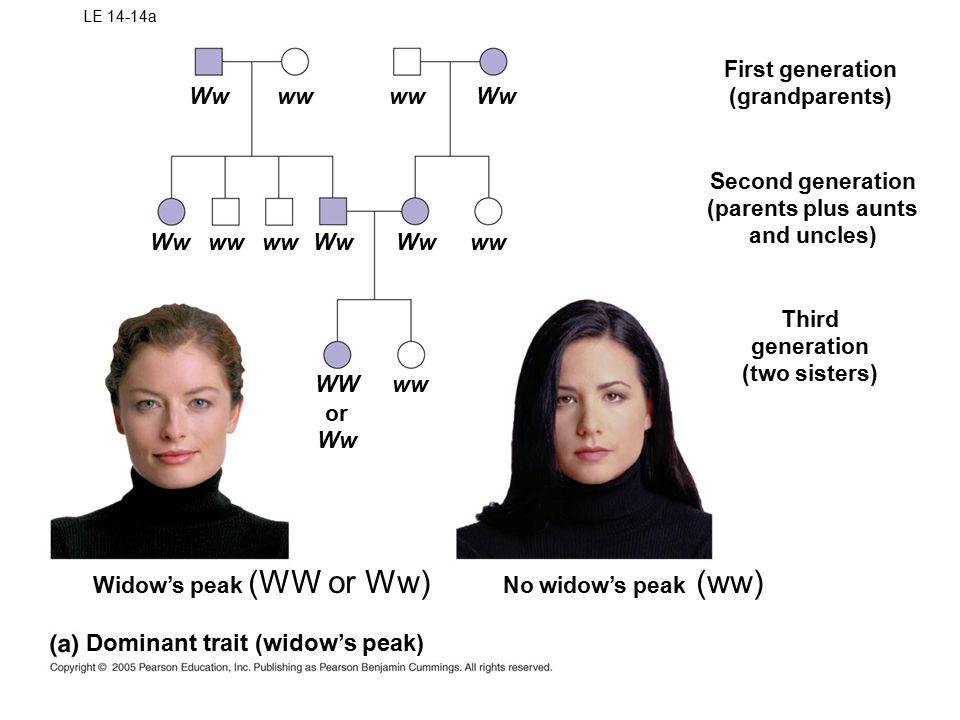 LE 14-14a Wwww Ww wwWwww Ww WWww or Ww No widow's peak Third generation (two sisters) Widow's peak Second generation (parents plus aunts and uncles) First generation (grandparents) Dominant trait (widow's peak) (WW or Ww)(ww)
