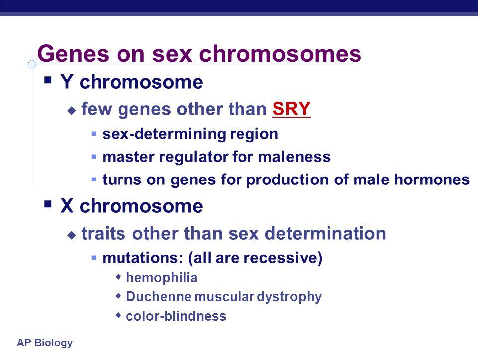 AP Biology XRXRXRXR XrYXrY Morgan's flies… x XrXr Y XRXR 100% red eyes XRXR XRXrXRXr XRYXRY XRYXRYXRXrXRXr x XRXrXRXr XRYXRY XRXR Y XRXR XrXr XRXrXRXr