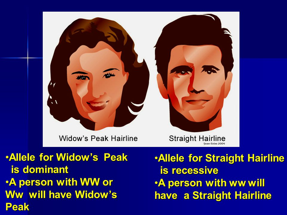 Allele for Widow's PeakAllele for Widow's Peak is dominant is dominant A person with WW or Ww will have Widow's PeakA person with WW or Ww will have Widow's Peak Allele for Straight HairlineAllele for Straight Hairline is recessive is recessive A person with ww will have a Straight HairlineA person with ww will have a Straight Hairline