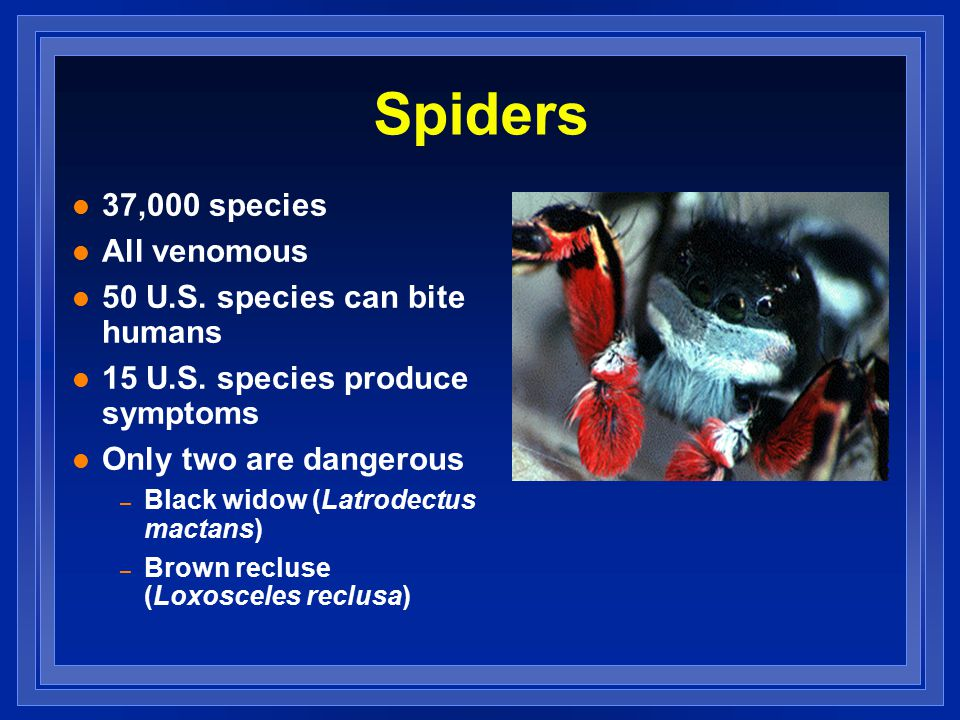 Spiders l 37,000 species l All venomous l 50 U.S. species can bite humans l 15 U.S.