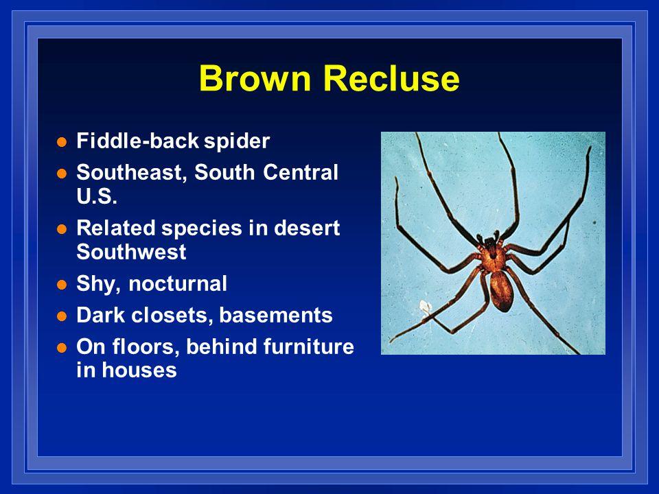 Brown Recluse l Fiddle-back spider l Southeast, South Central U.S.