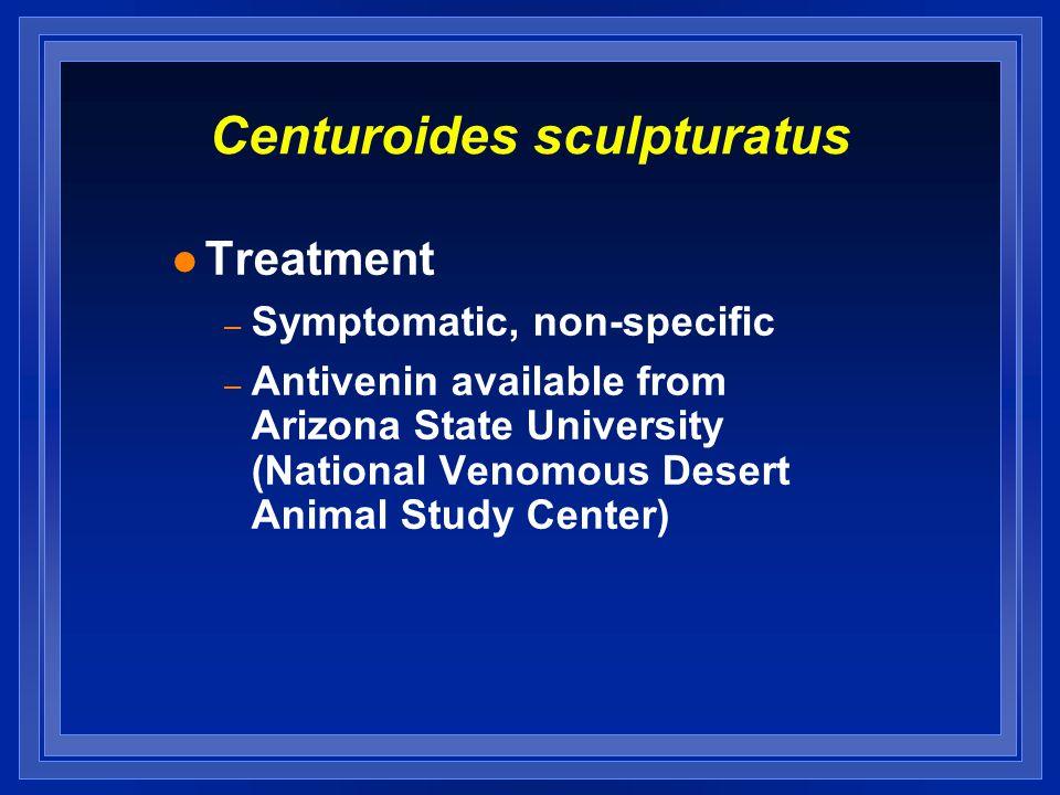Centuroides sculpturatus l Treatment – Symptomatic, non-specific – Antivenin available from Arizona State University (National Venomous Desert Animal Study Center)