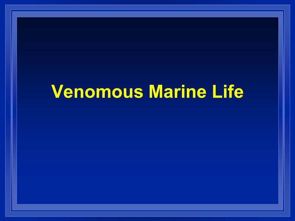 Venomous Marine Life