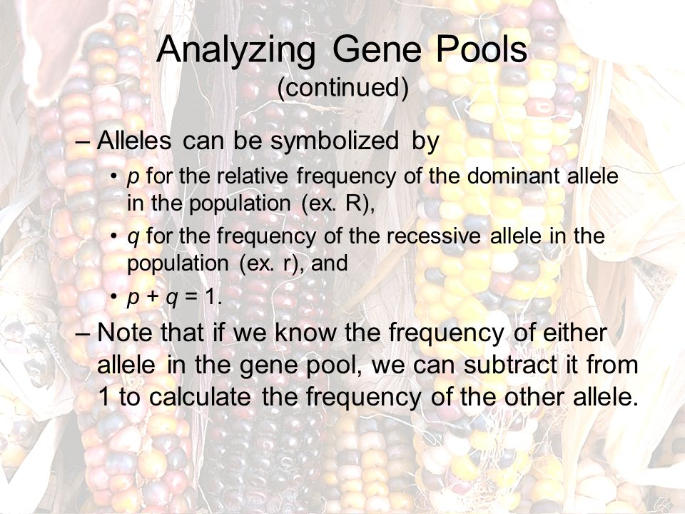 Analyzing Gene Pools (continued) –Alleles can be symbolized by p for the relative frequency of the dominant allele in the population (ex. R), q for th