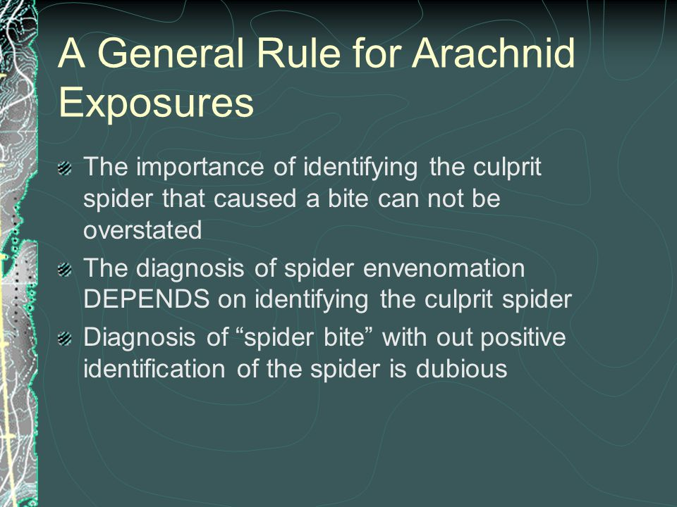 A General Rule for Arachnid Exposures The importance of identifying the culprit spider that caused a bite can not be overstated The diagnosis of spide