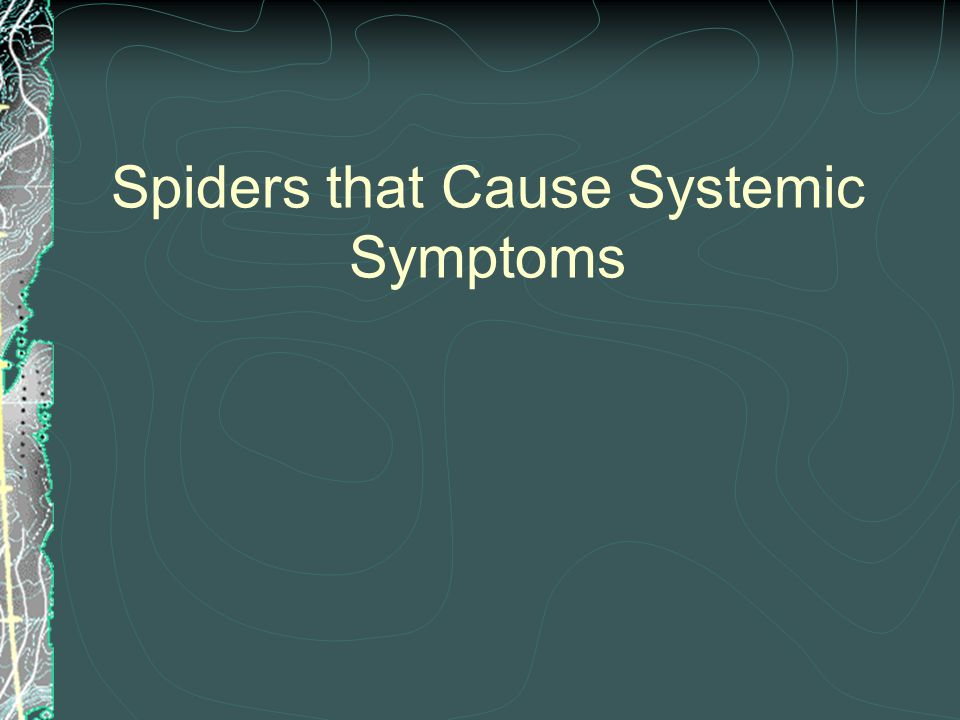 Spiders that Cause Systemic Symptoms