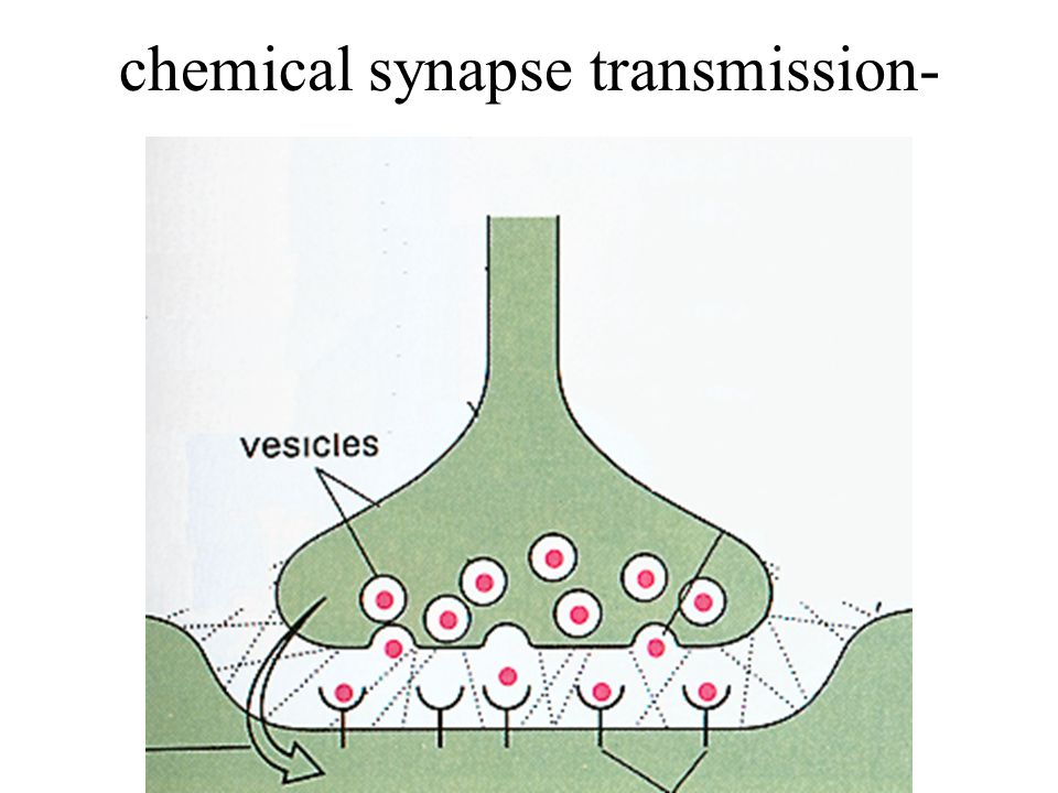 chemical synapse transmission-