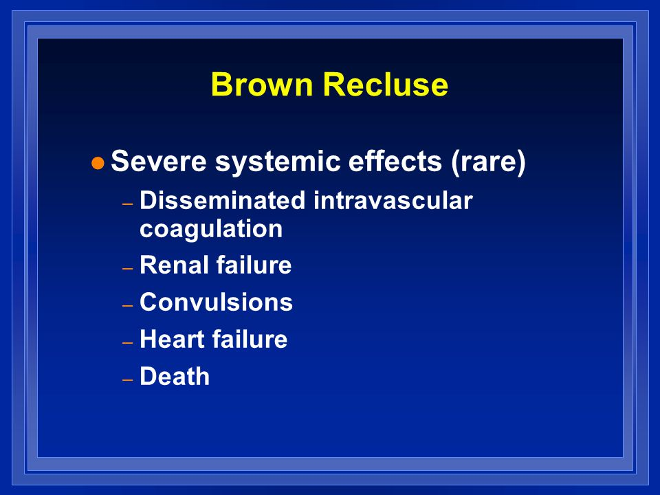Brown Recluse l Severe systemic effects (rare) – Disseminated intravascular coagulation – Renal failure – Convulsions – Heart failure – Death