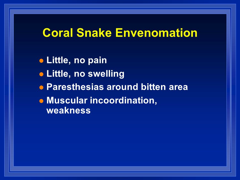 Coral Snake Envenomation l Little, no pain l Little, no swelling l Paresthesias around bitten area l Muscular incoordination, weakness