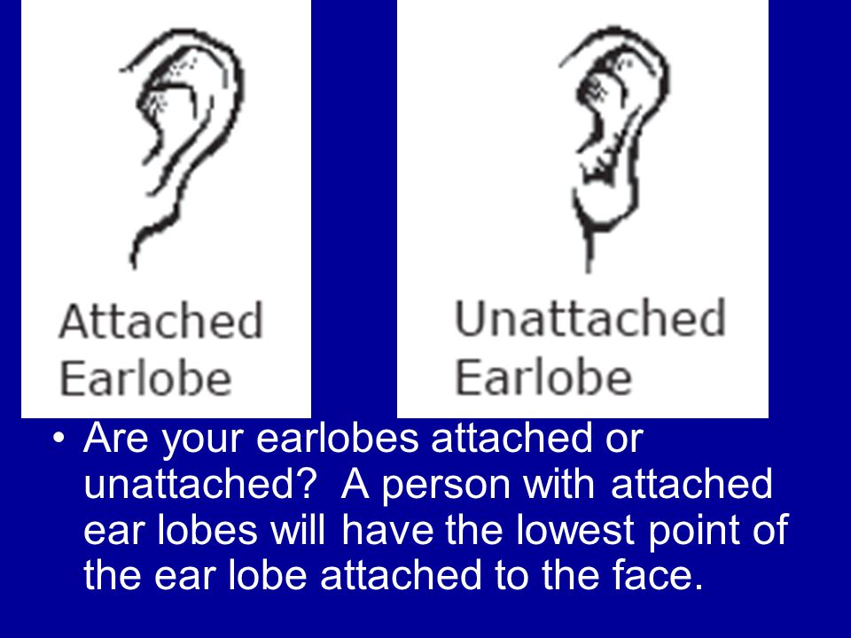 Are your earlobes attached or unattached.
