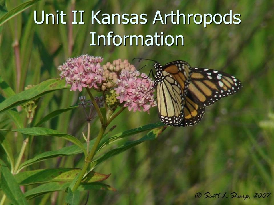 Unit II Kansas Arthropods Information