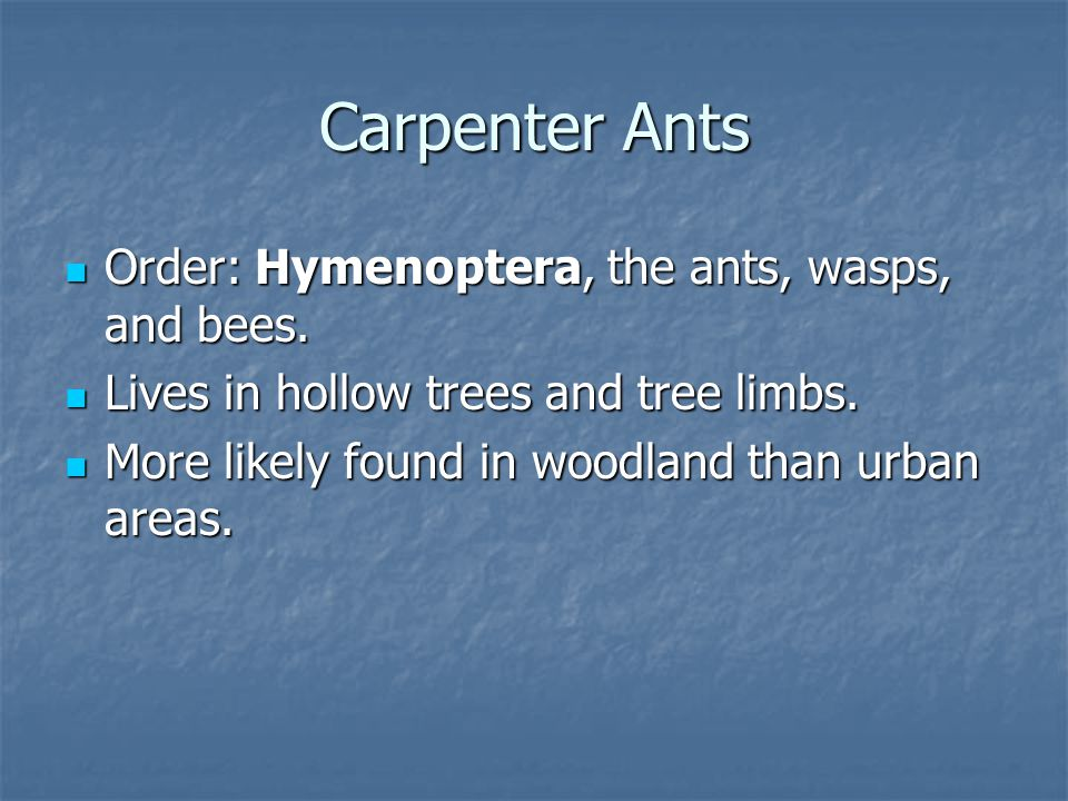 Order: Hymenoptera, the ants, wasps, and bees. Order: Hymenoptera, the ants, wasps, and bees.