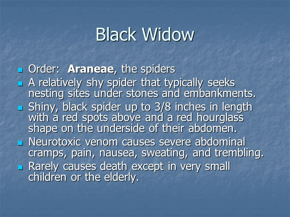 Order: Araneae, the spiders Order: Araneae, the spiders A relatively shy spider that typically seeks nesting sites under stones and embankments.