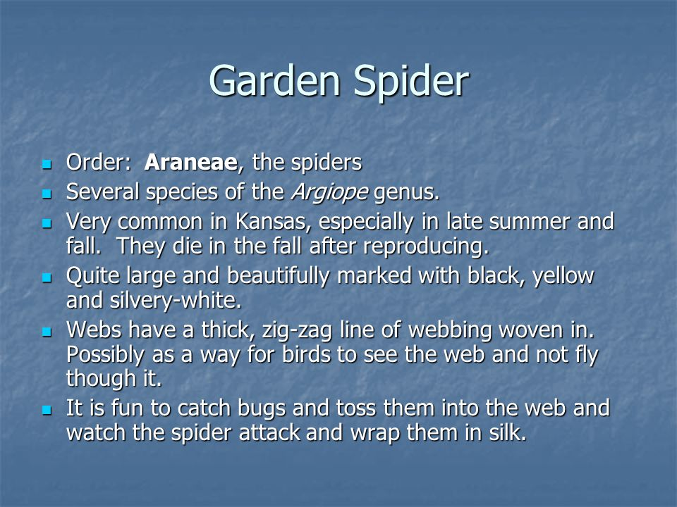 Order: Araneae, the spiders Order: Araneae, the spiders Several species of the Argiope genus.