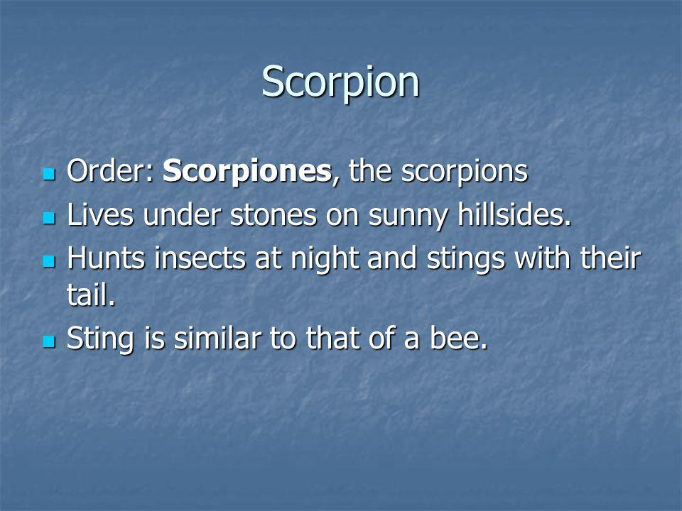 Scorpion Order: Scorpiones, the scorpions Order: Scorpiones, the scorpions Lives under stones on sunny hillsides.