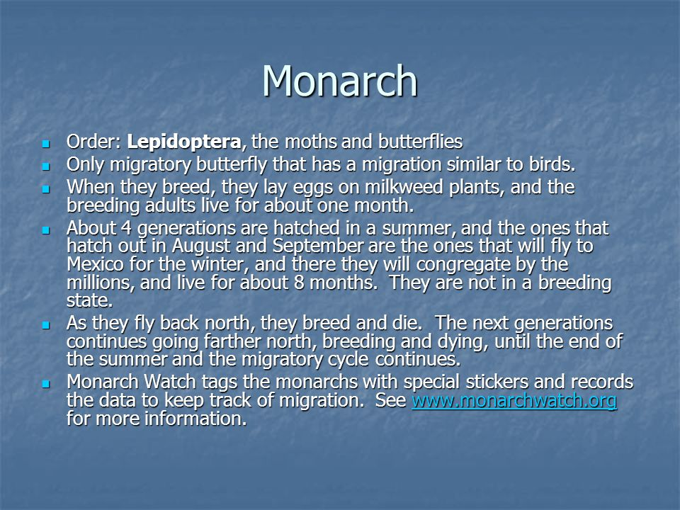 Monarch Order: Lepidoptera, the moths and butterflies Order: Lepidoptera, the moths and butterflies Only migratory butterfly that has a migration similar to birds.