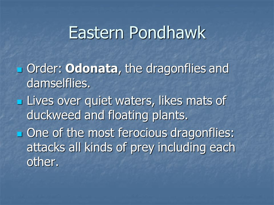 Order: Odonata, the dragonflies and damselflies. Order: Odonata, the dragonflies and damselflies.