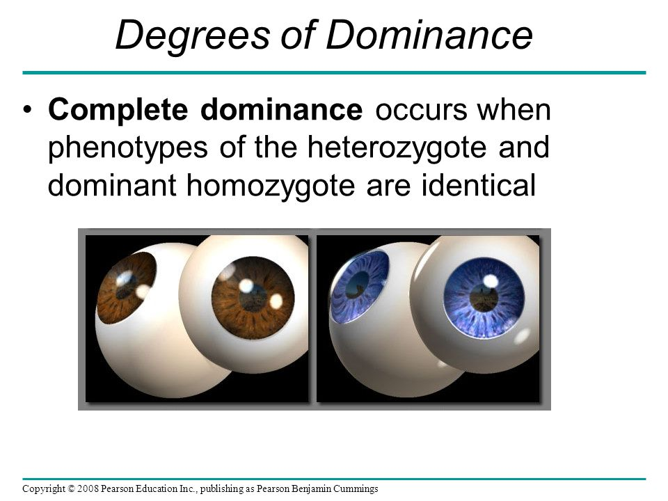Degrees of Dominance Complete dominance occurs when phenotypes of the heterozygote and dominant homozygote are identical Copyright © 2008 Pearson Education Inc., publishing as Pearson Benjamin Cummings