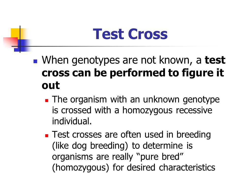 Test Cross When genotypes are not known, a test cross can be performed to figure it out The organism with an unknown genotype is crossed with a homozy