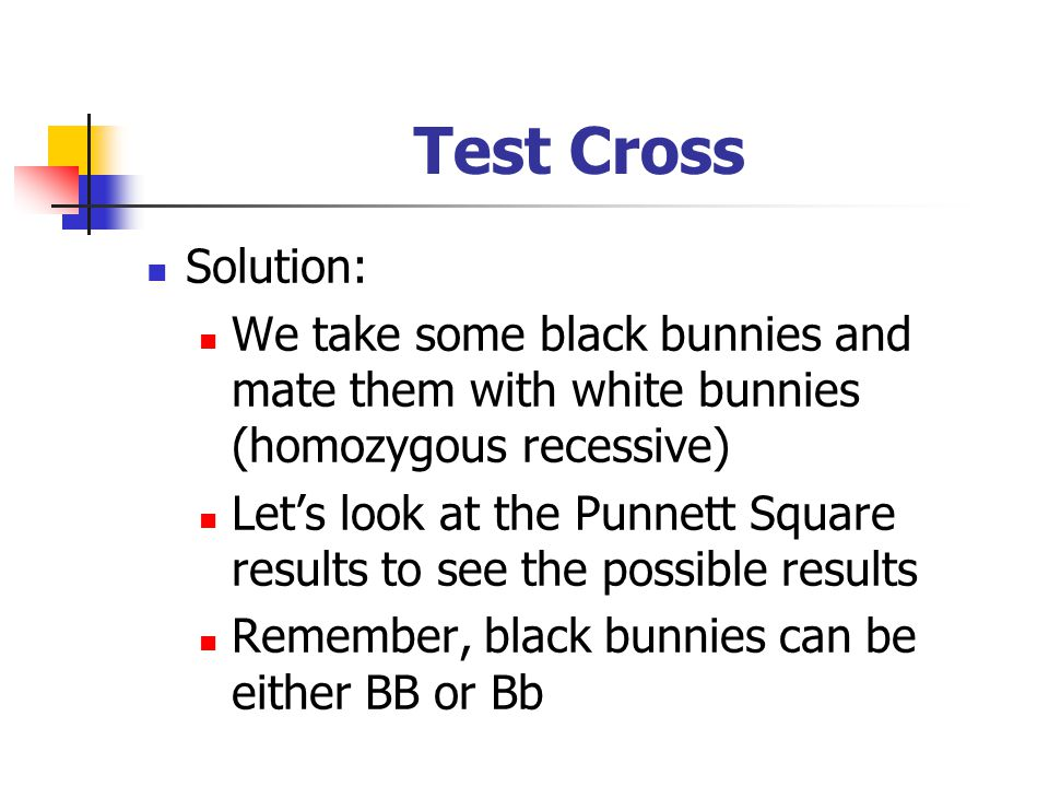 Test Cross Solution: We take some black bunnies and mate them with white bunnies (homozygous recessive) Let's look at the Punnett Square results to se