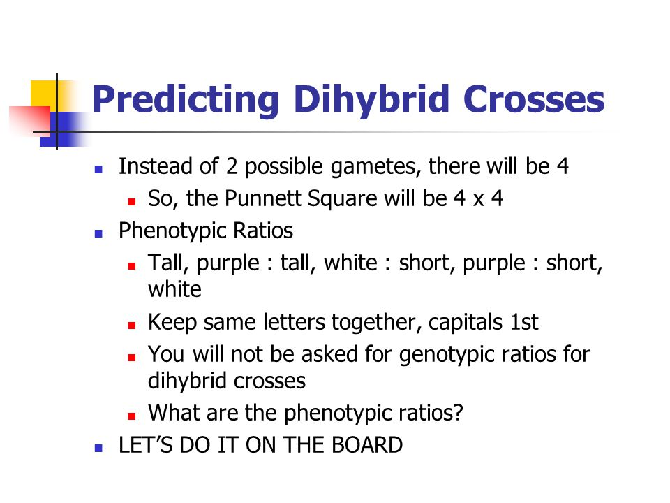 Predicting Dihybrid Crosses Instead of 2 possible gametes, there will be 4 So, the Punnett Square will be 4 x 4 Phenotypic Ratios Tall, purple : tall,